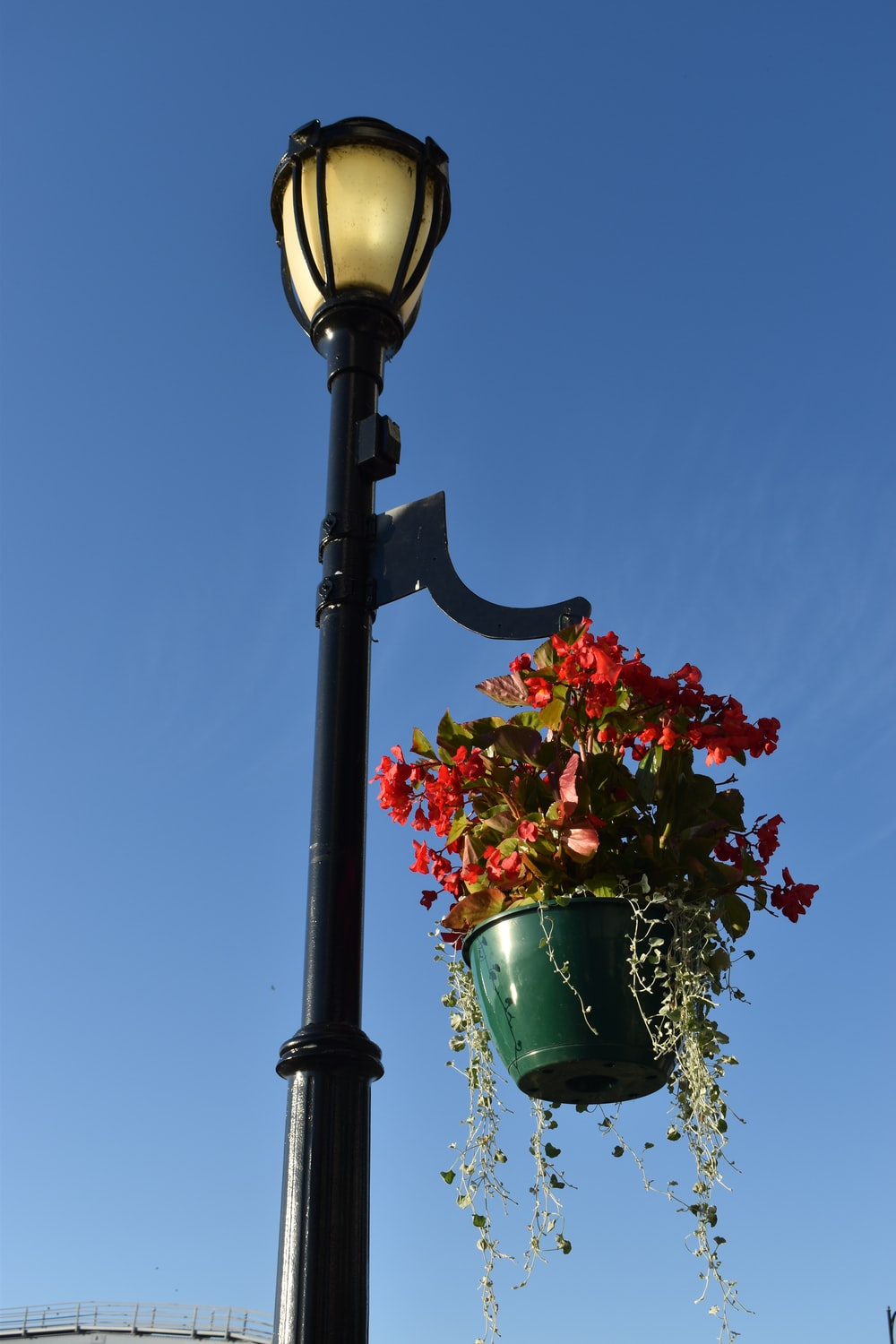black street light with red flowers