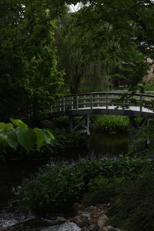 gray wooden bridge over river