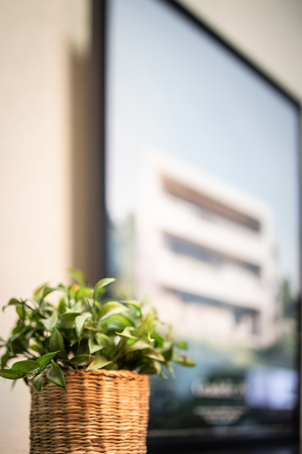 green plant in front of white concrete building during daytime