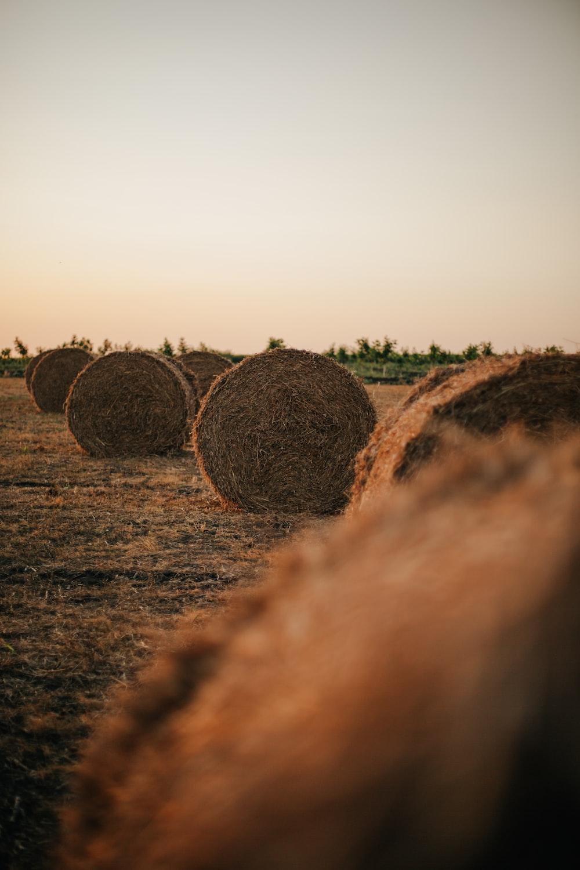 brown hays on brown field during daytime