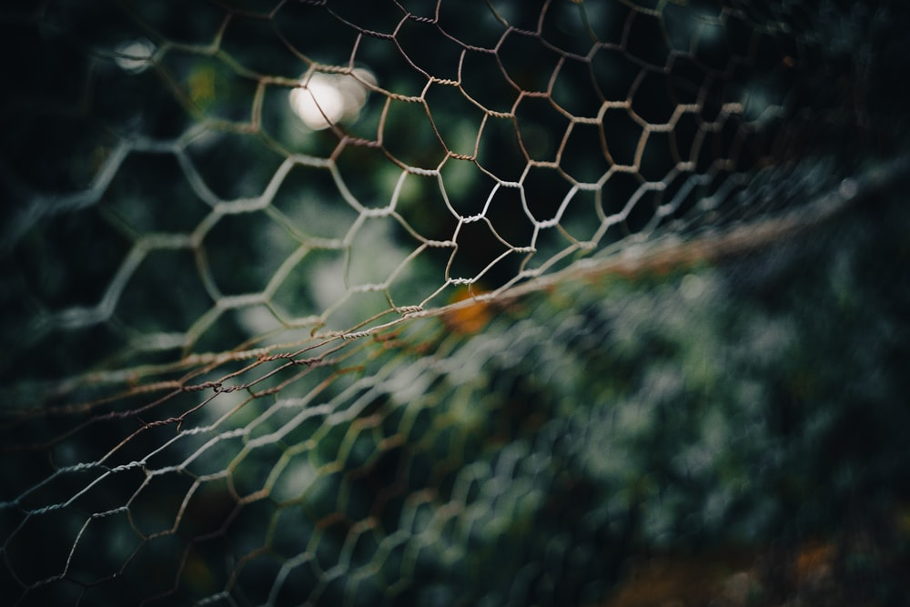 white and black net in close up photography