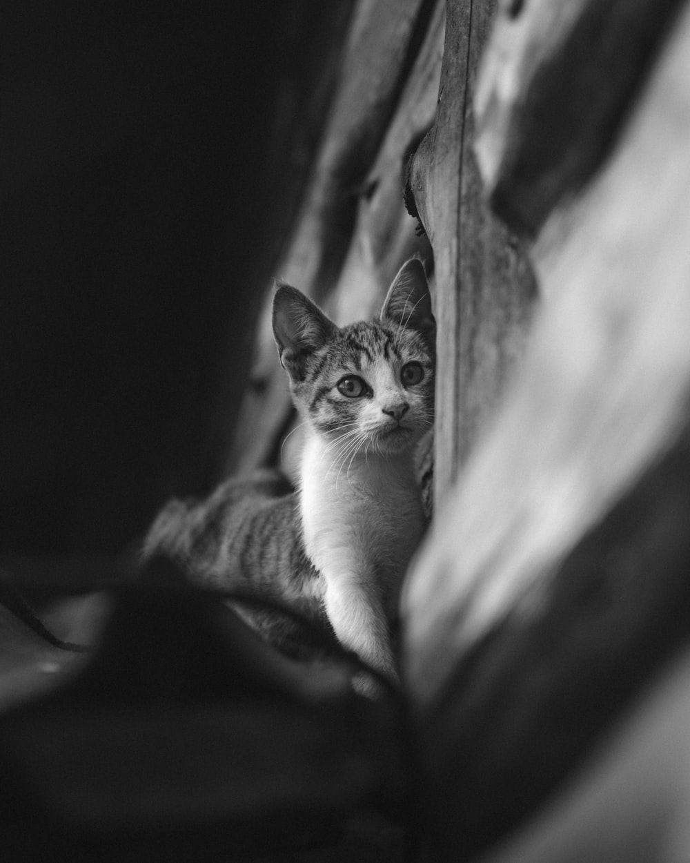grayscale photo of cat on table