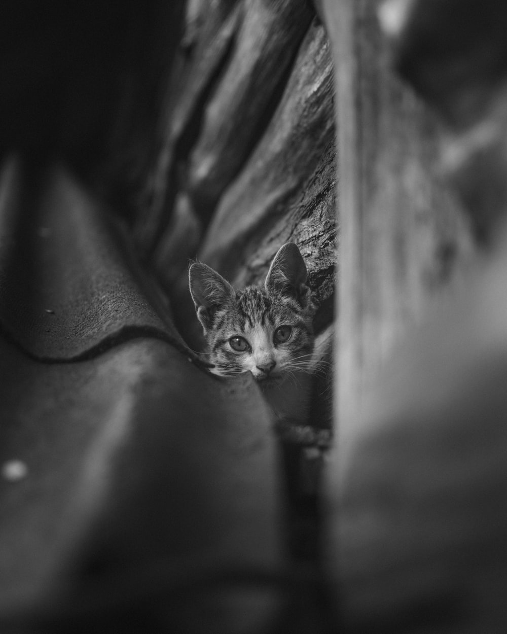 grayscale photo of tabby cat