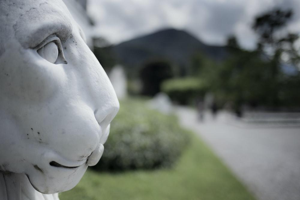 white animal head statue during daytime