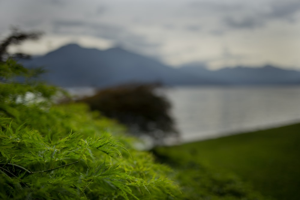 green grass near body of water during daytime