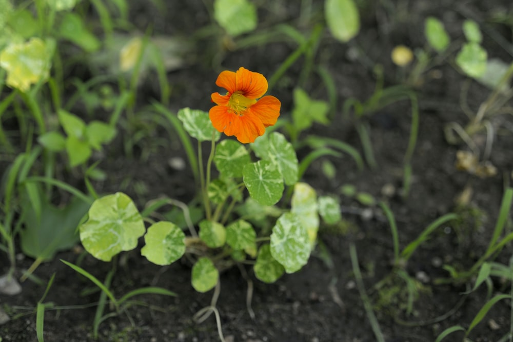 orange flower with green leaves