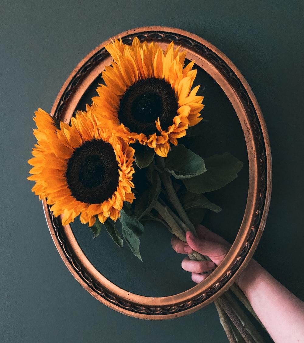 yellow sunflower in brown round frame