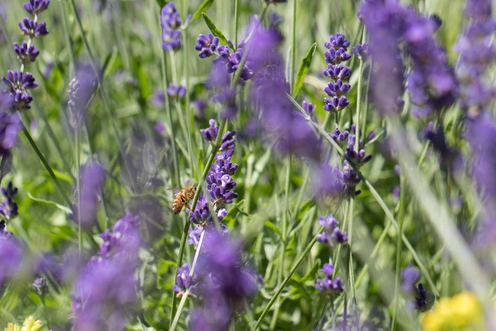 purple flower in the field