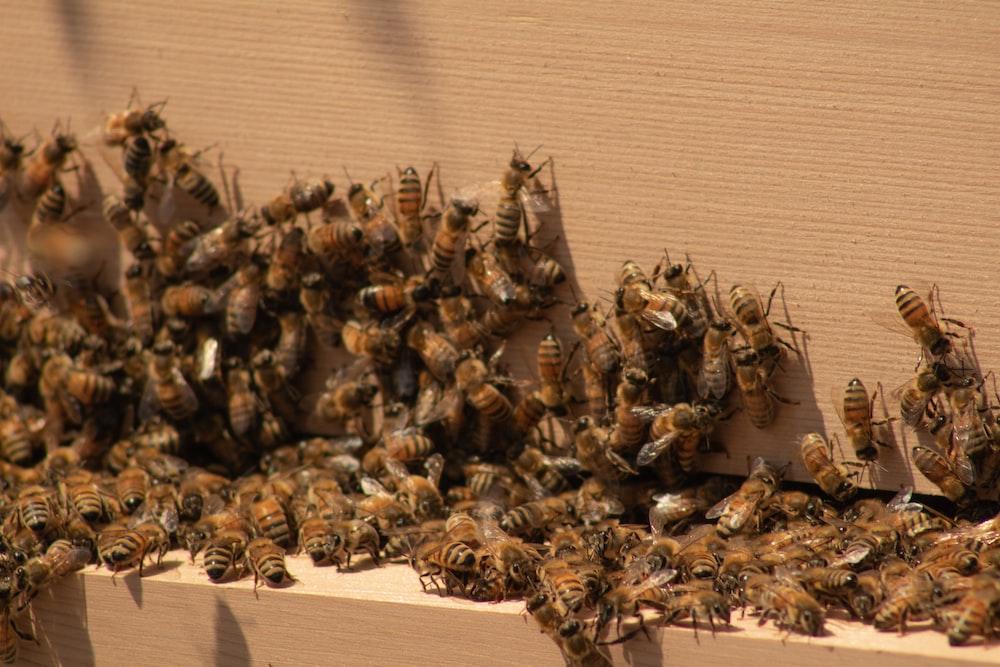 brown and black bee on brown cardboard box
