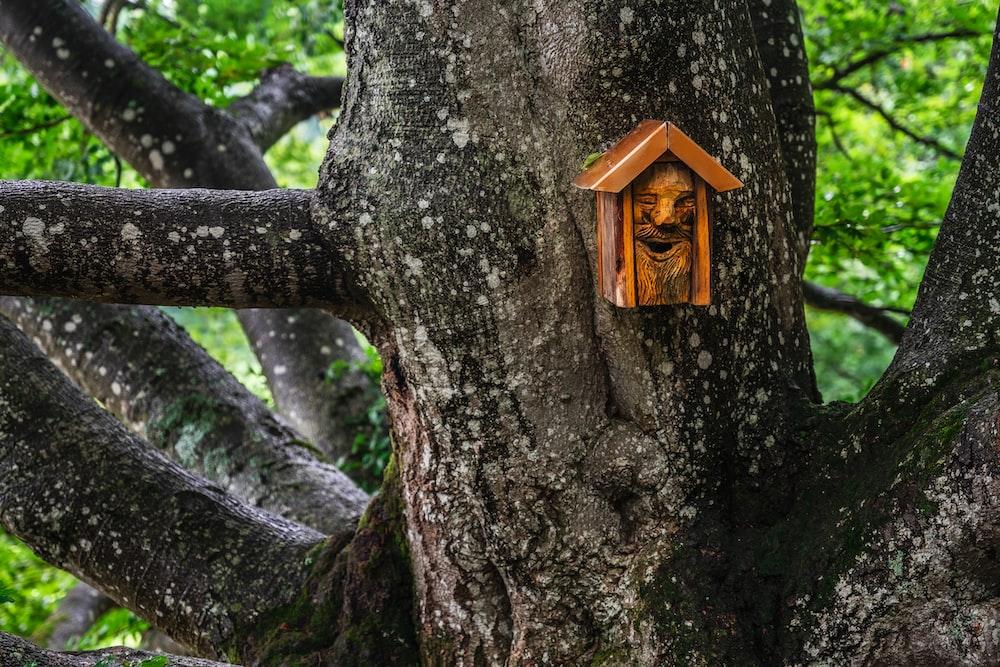 brown wooden birdhouse on tree