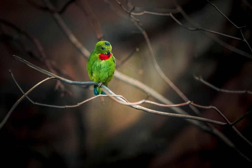 green bird on brown tree branch