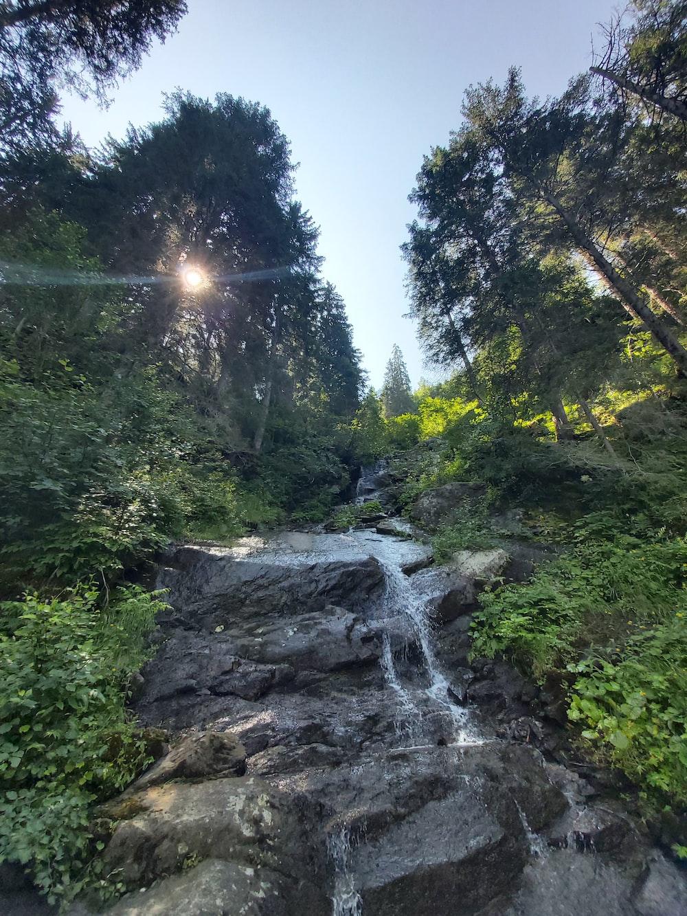 waterfalls between green trees under blue sky during daytime