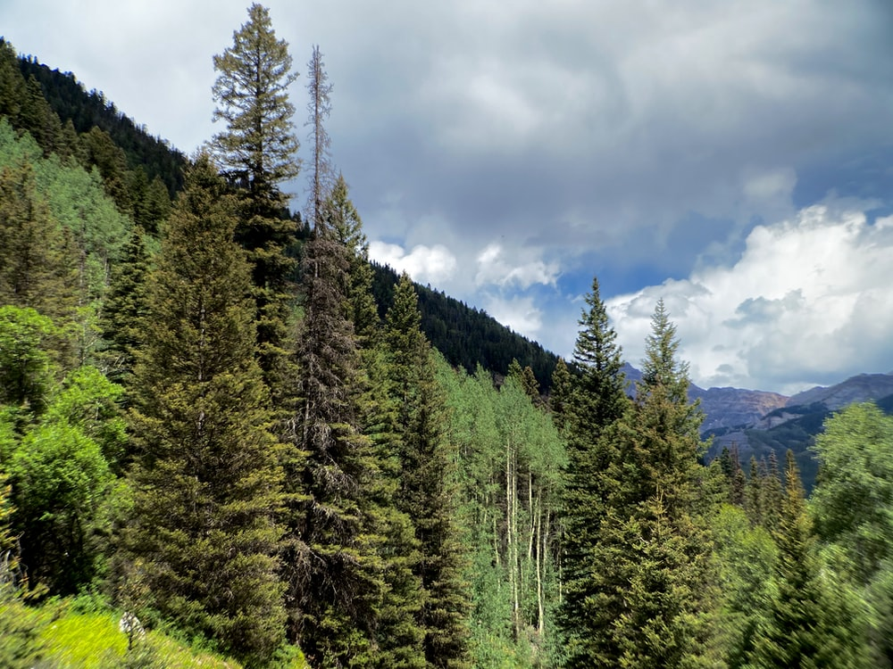 green pine trees under white clouds and blue sky during daytime