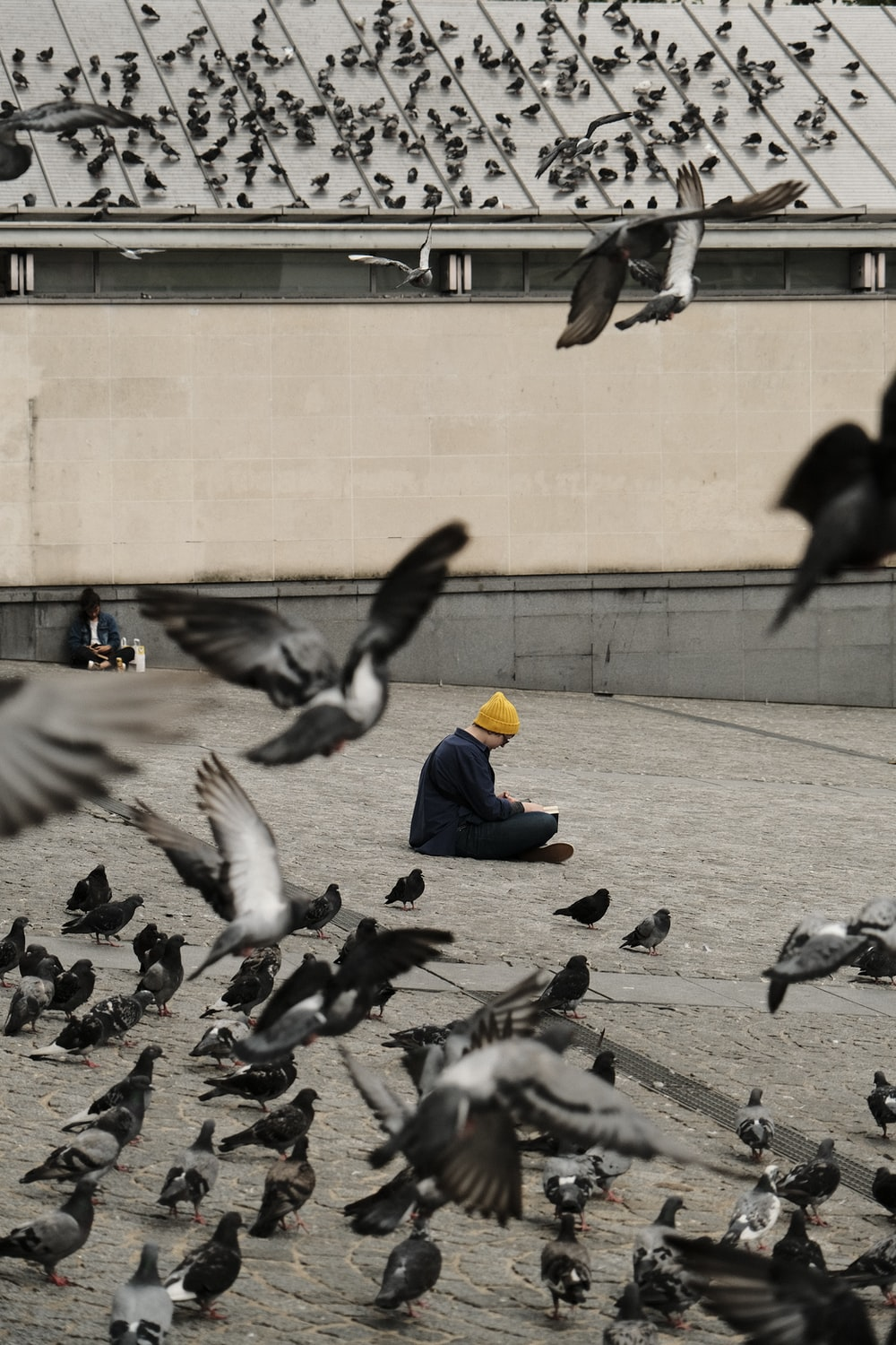 flock of pigeons on gray concrete floor during daytime