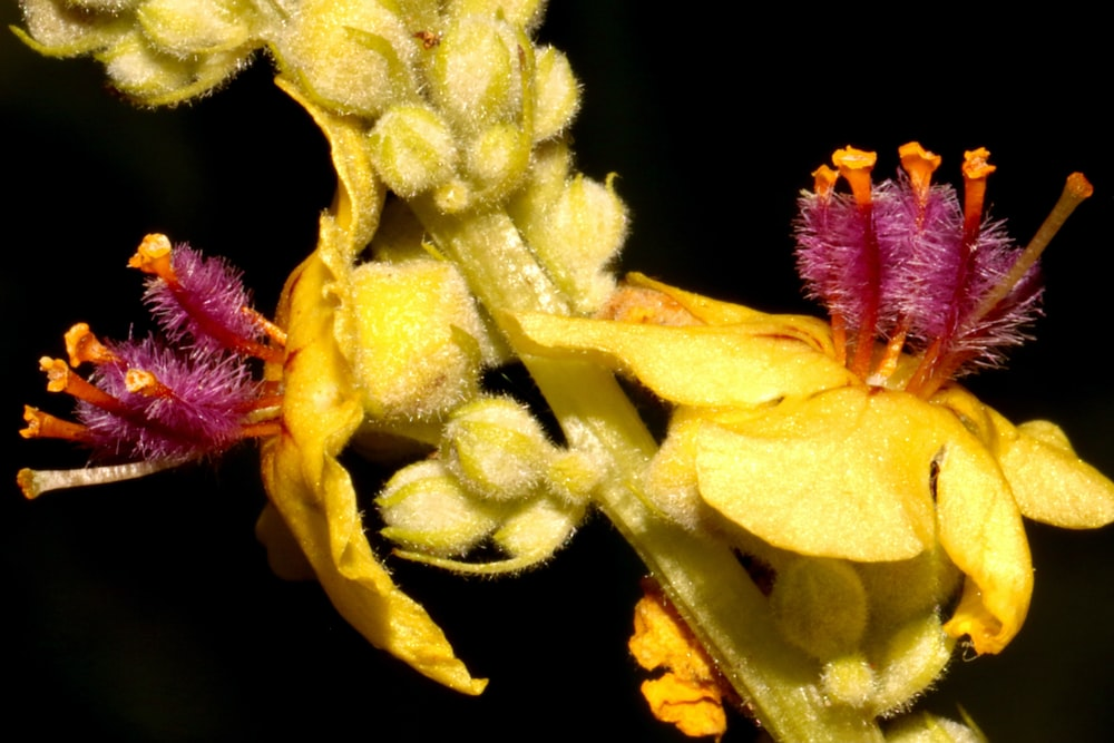 yellow and pink flower in macro photography