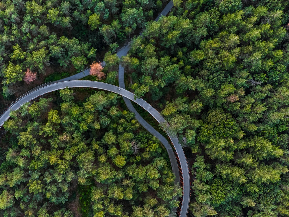 green trees and brown arch