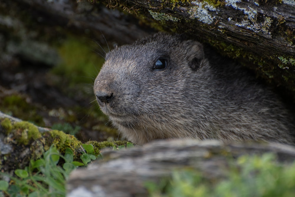 gray rodent on green moss