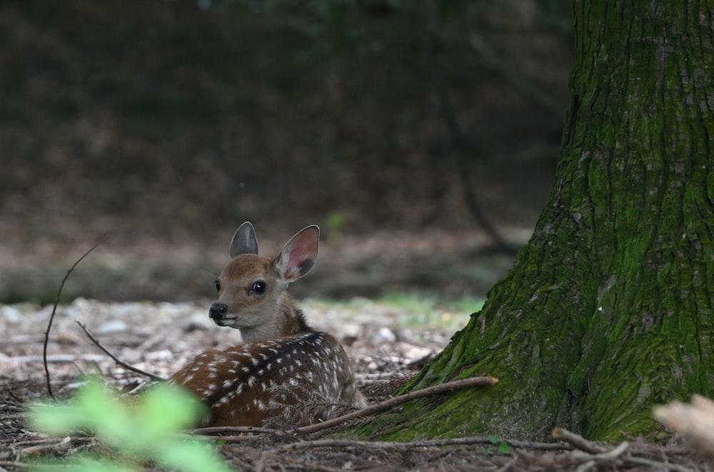 brown and white deer on brown tree