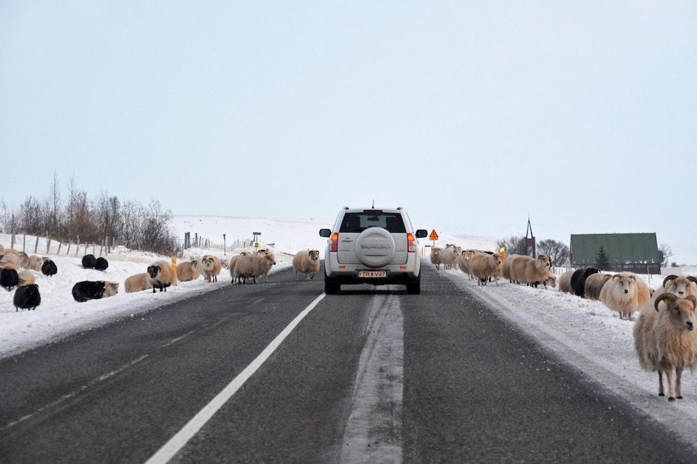 white car on road during daytime