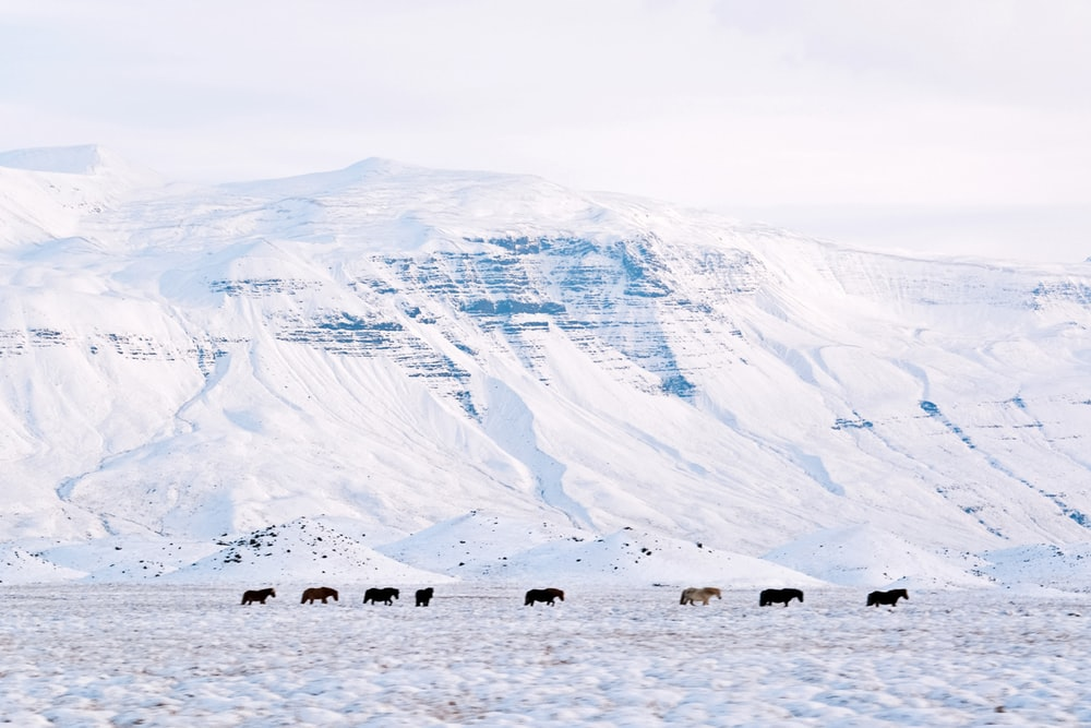 people on snow covered field near brown and white mountains during daytime