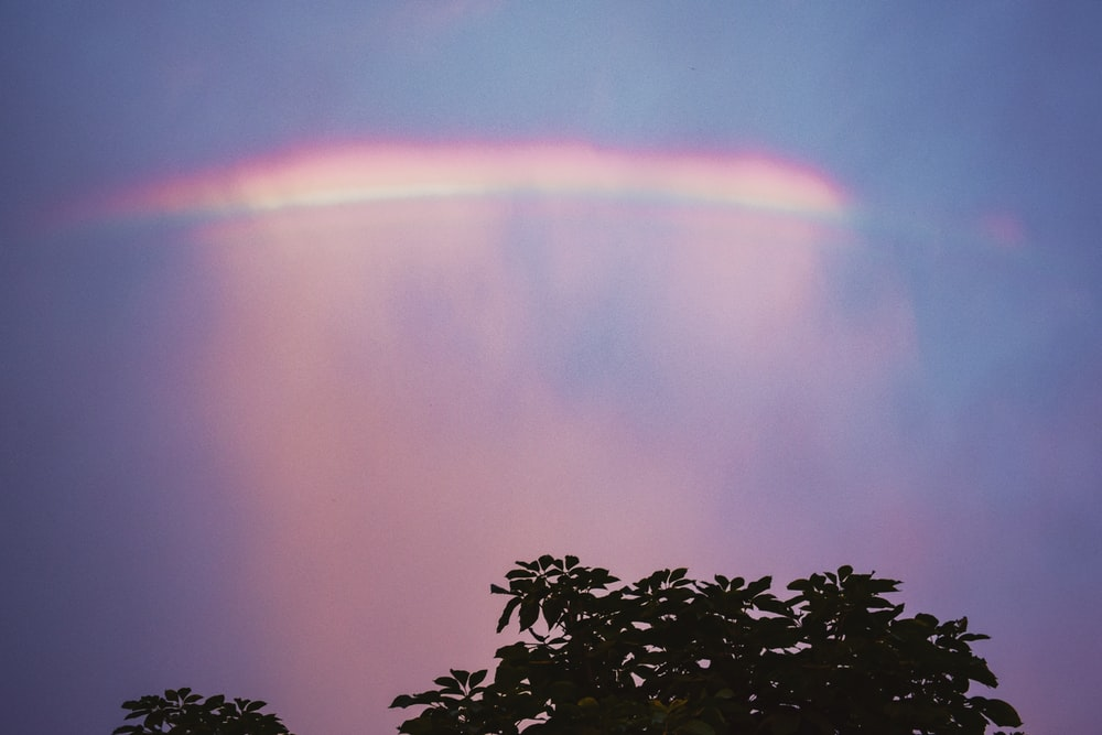 green leaves with rainbow in the sky