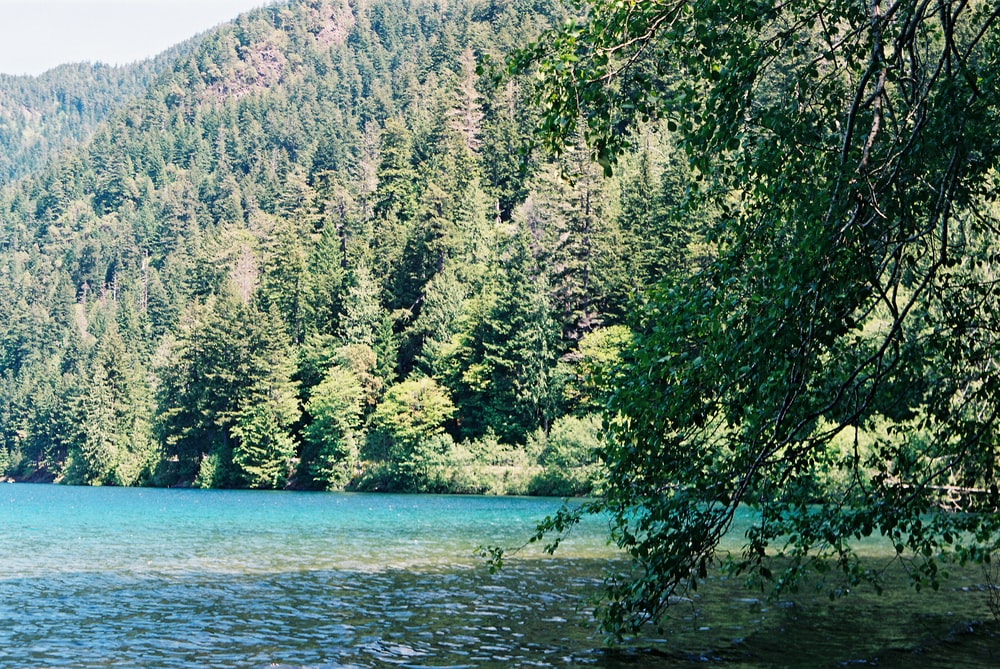 green trees near body of water during daytime