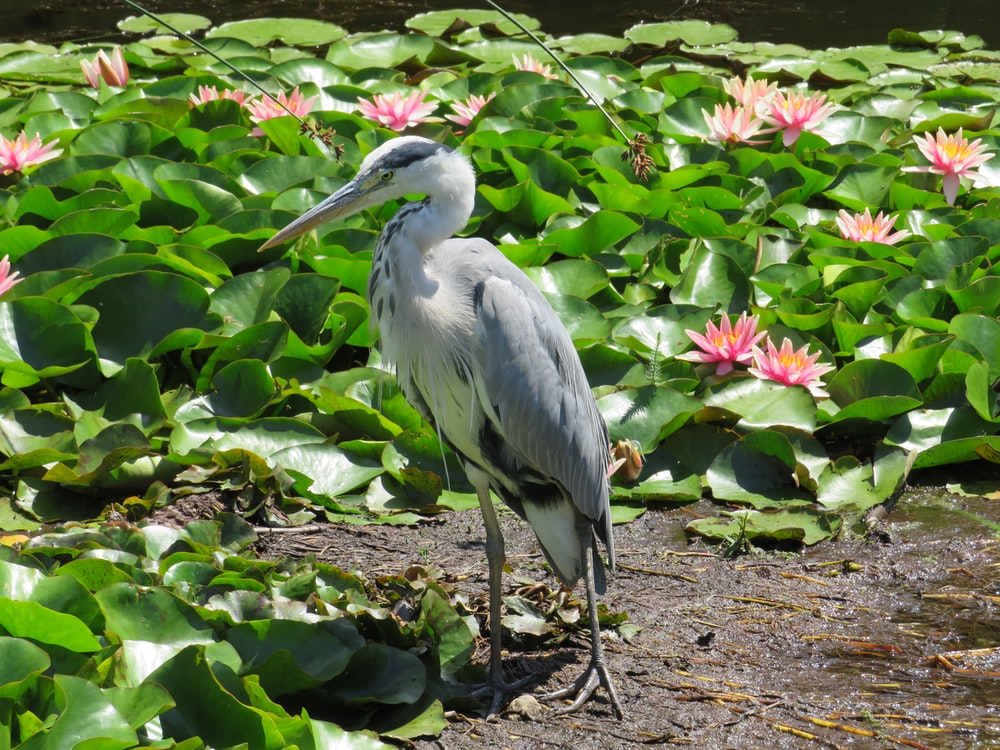 white stork on green leaves