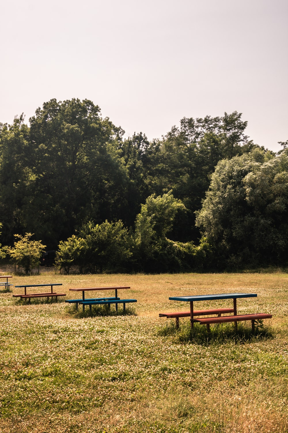 brown wooden bench near green trees during daytime