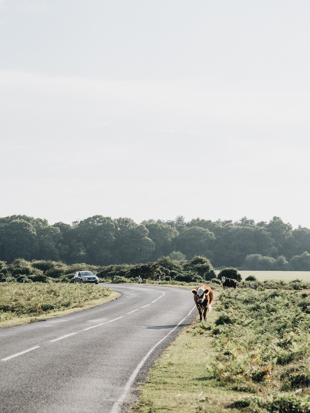 2 people riding horses on road during daytime