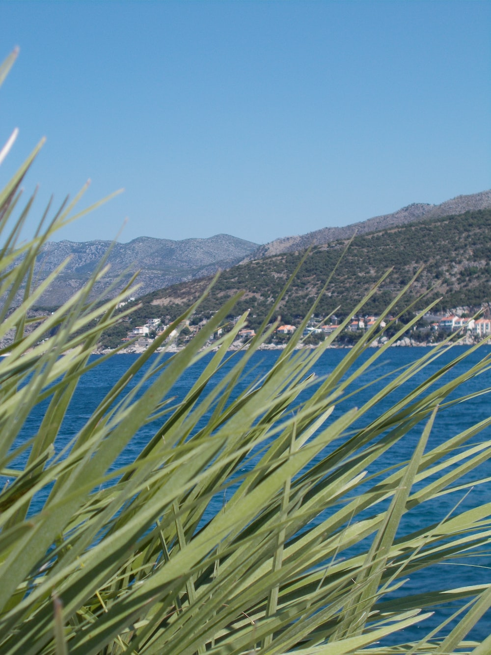 green plants on blue sea during daytime