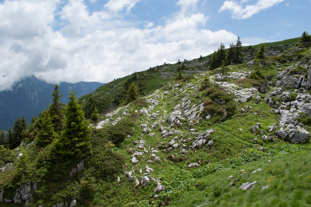green trees on mountain under white clouds and blue sky during daytime
