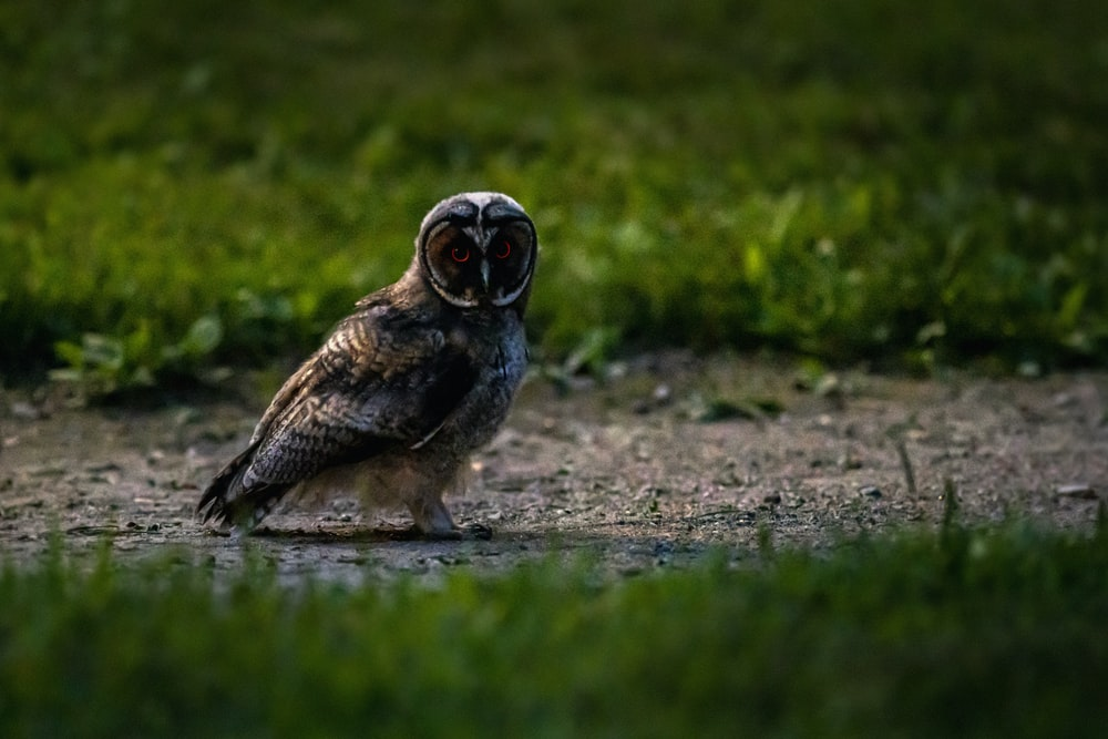 brown and black owl on ground during daytime