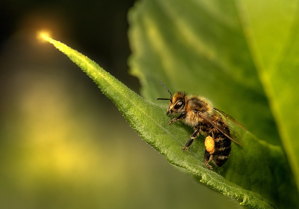 black and yellow bee on green leaf