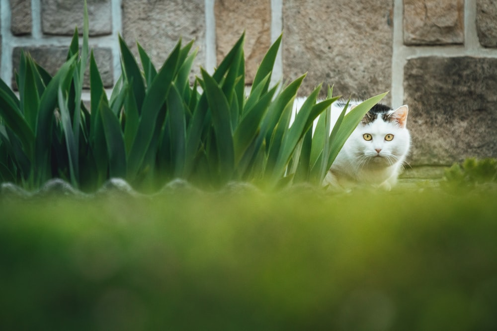 white and brown cat on green grass