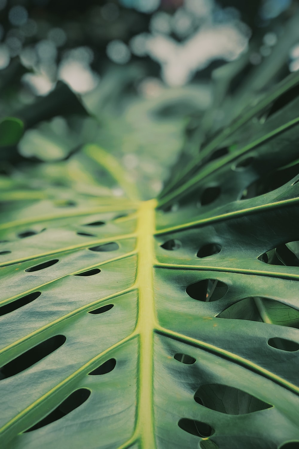 green leaf in macro lens photography