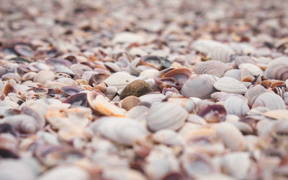 white and brown seashells on brown sand during daytime