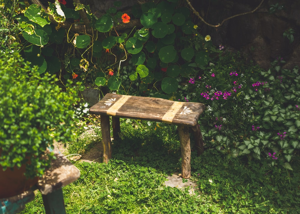brown wooden bench beside green plants
