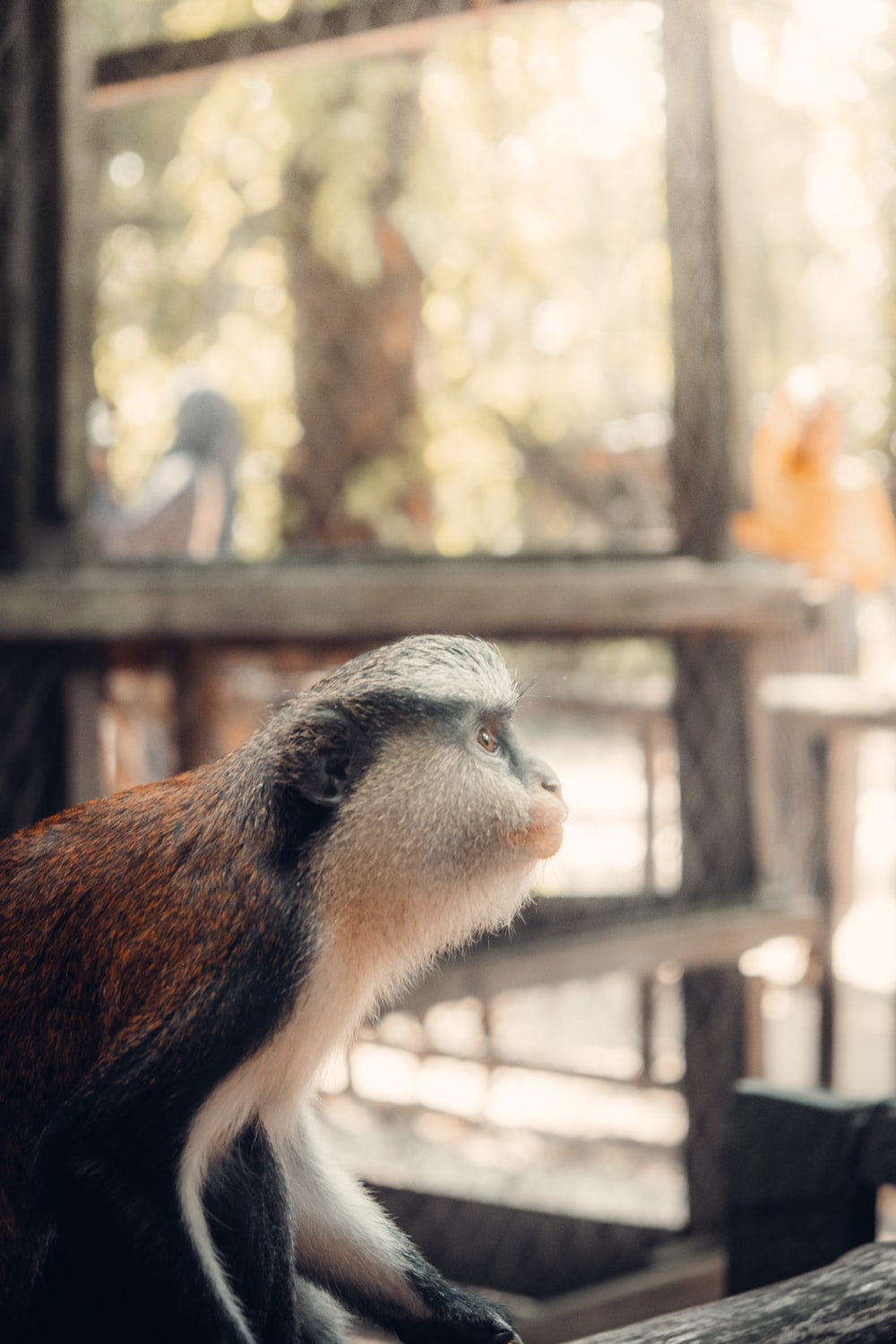 brown and white monkey on brown wooden fence during daytime