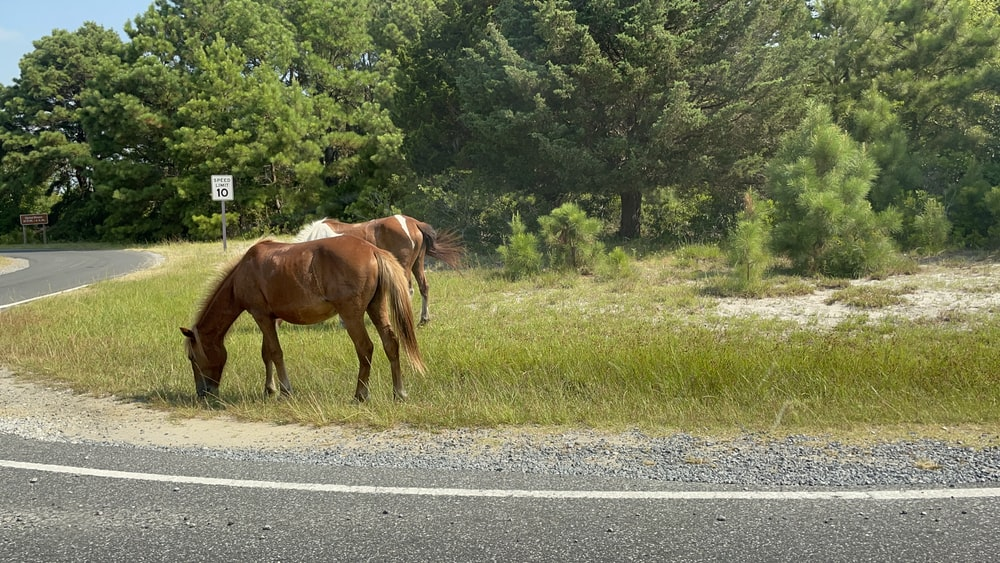 brown horse on gray asphalt road during daytime