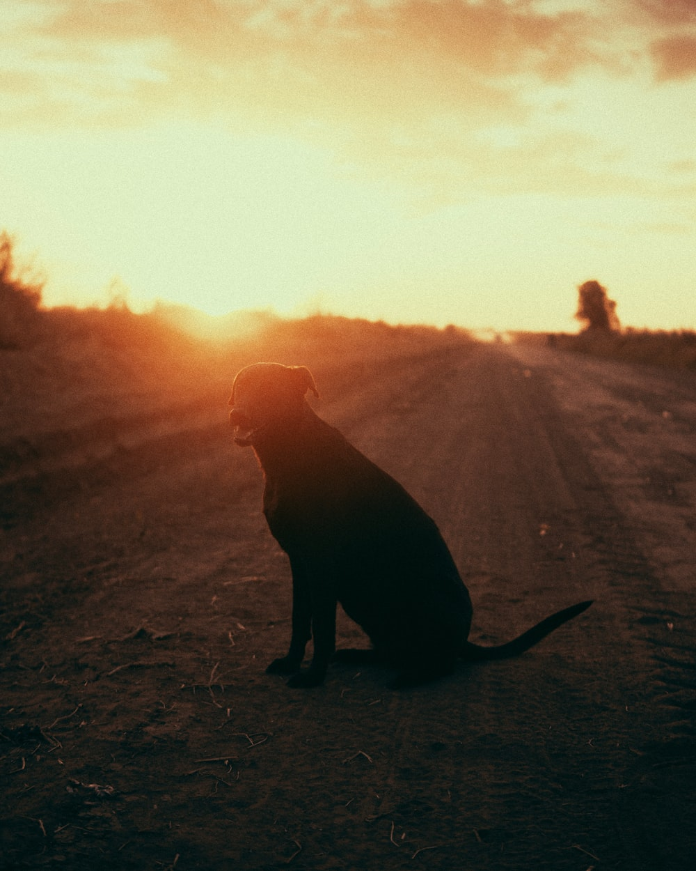 silhouette of dog on field during sunset