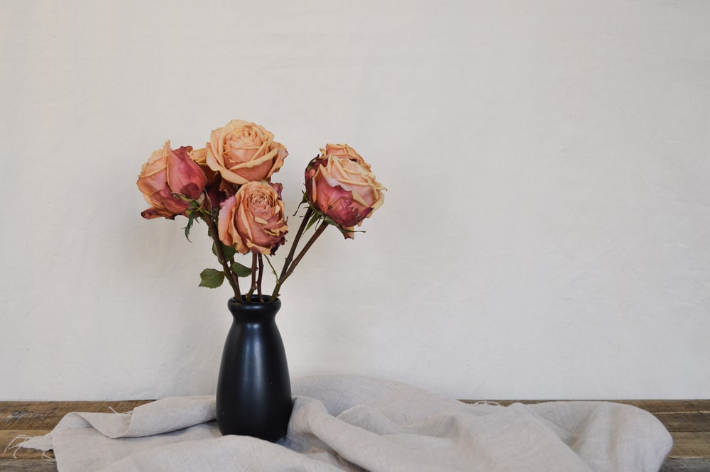 pink roses in black vase