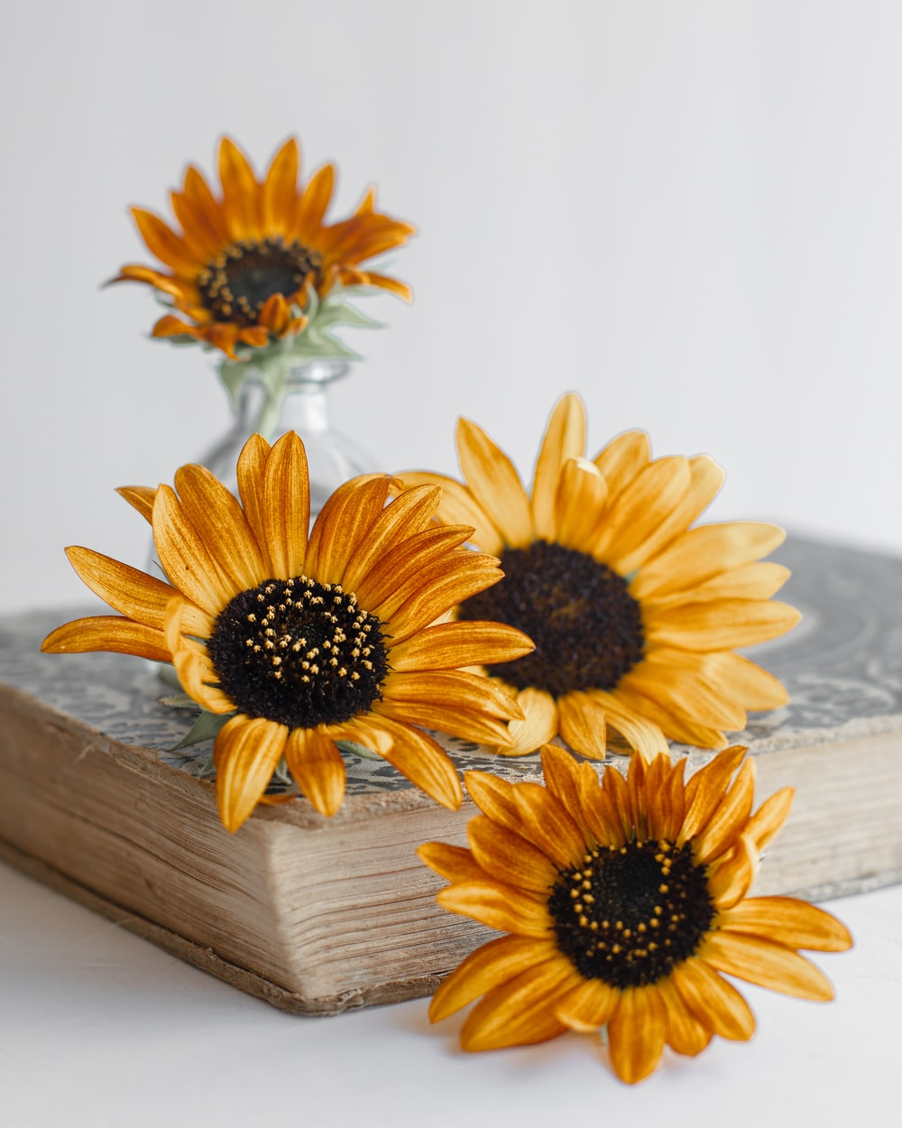 yellow sunflower on brown wooden table