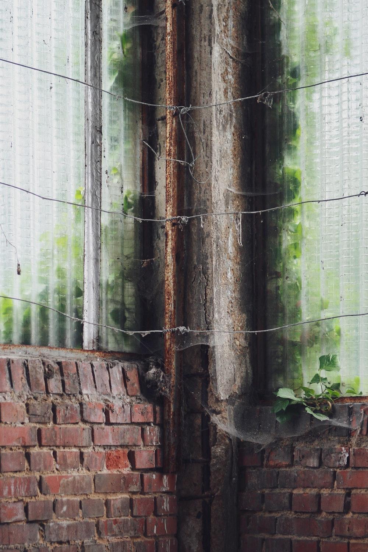 green plants on brown brick wall