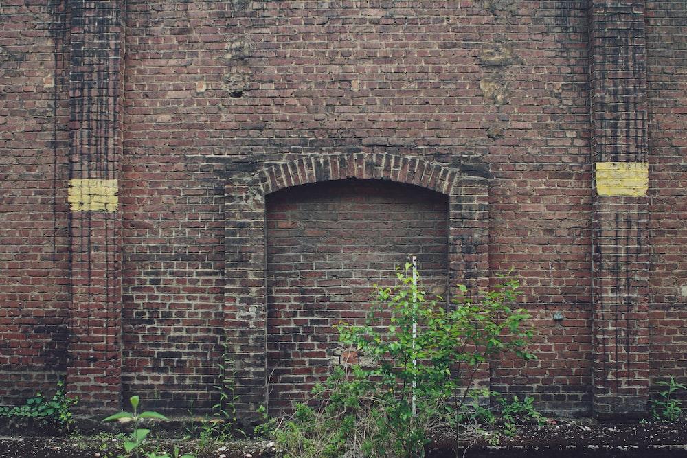 green plants beside brown brick wall