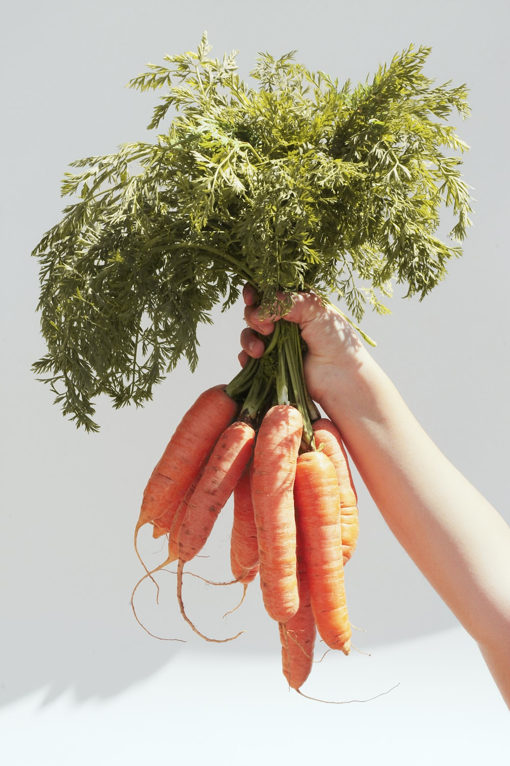 person holding green and red bird on orange carrot