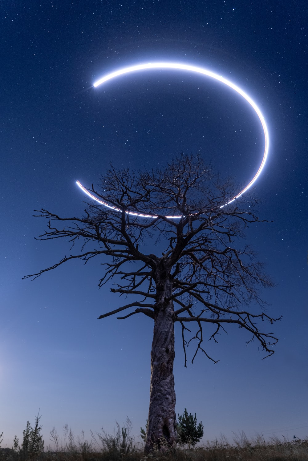 bare tree under blue sky during night time