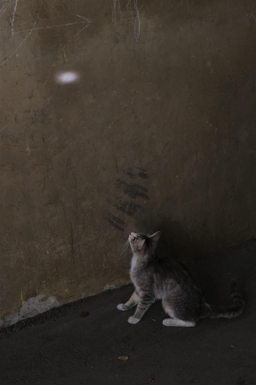 silver tabby cat on gray concrete floor