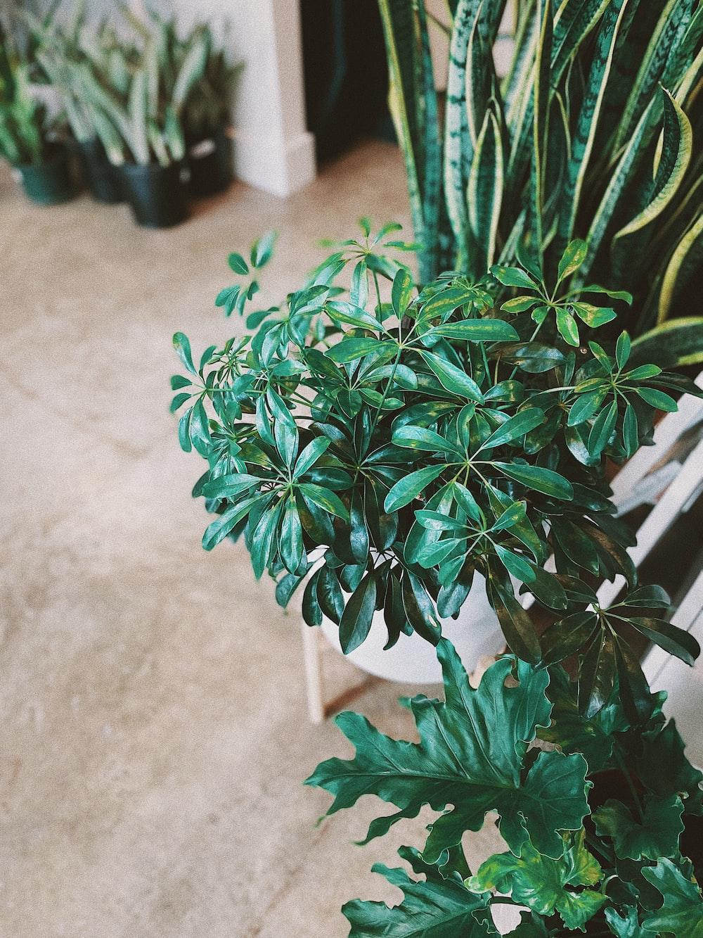green plant on white concrete floor