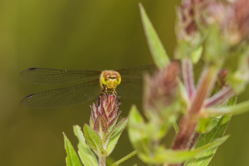 green dragonfly perched on green leaf in close up photography during daytime