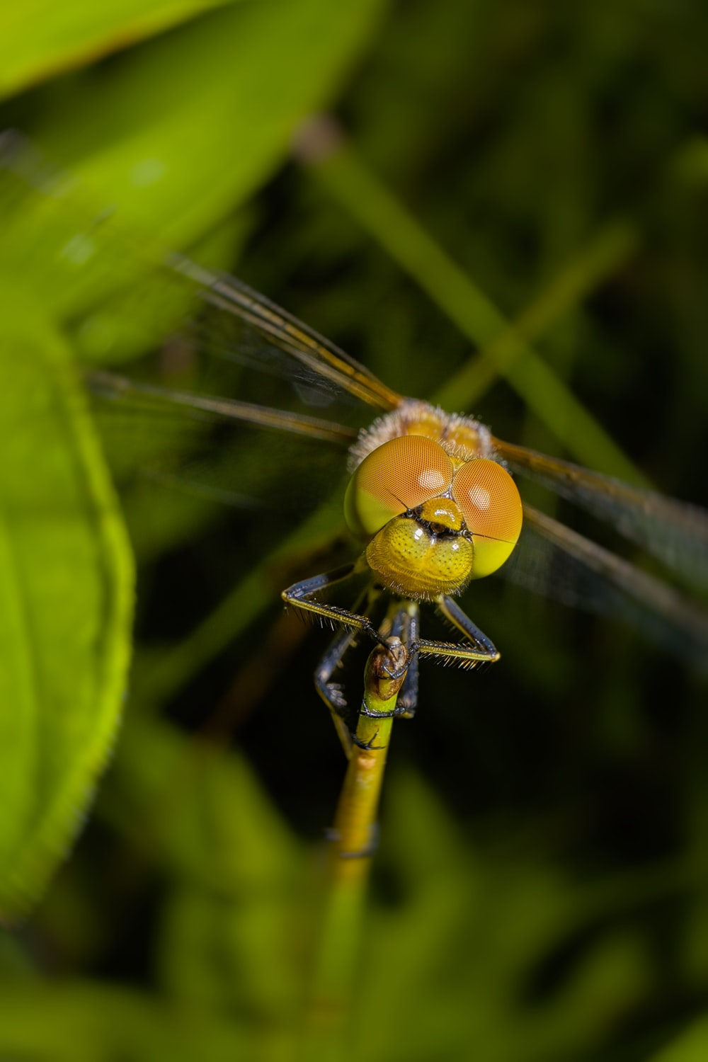 brown and green dragonfly perched on green leaf in close up photography during daytime